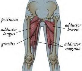 Inner_thigh