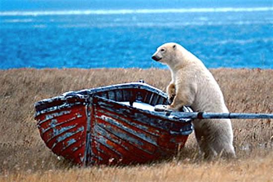 Polarbearandboat